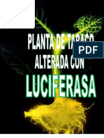 Luciferasa Final..
