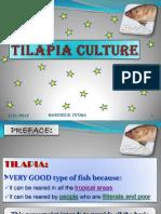 Maricrisyutiga Tilapia Culture