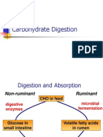 2 Carbohydrate Digestion