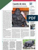 Gorilas en el punto de mira