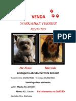 Venda York is Hire Terrier