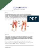 Desgarros_musculares