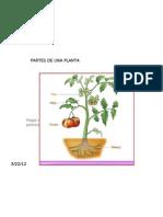 Parte de Una Planta