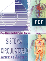 Sistema Circulatorio Aorta y Carotida Interna