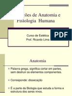 Noções de Anatomia e Fisiologia  Humana