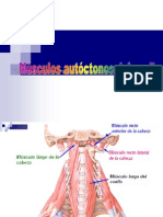 musculosautoctonosdelcuello-100727140241-phpapp01
