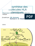 Bio Synthese Des Molecules HLA Partie 1
