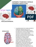 Cerebro Femenino vs Cerebro Masculino