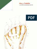 05 Sinovectomia de La Articulacion Tovi0-Peroneo-Astragalina