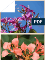 Arborele de orhidee