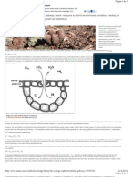 The Ecology of Photosintesis Pathways