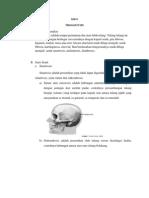anatomi persendian