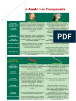 Tabela de Anatomia Comparada