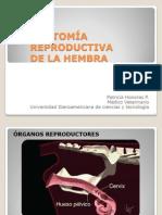 Anatomia Reproductiva de La Hembra