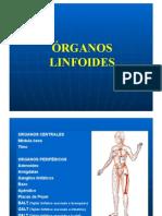 Org. Linfoides