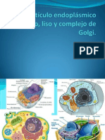 Reticulo Endoplasmico Rugoso Lisi Complejo De