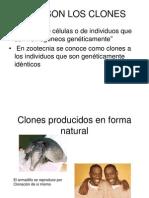 Clonación animal. Ivo Franz Carreño Manrique.UNMSM.Med.Veterinaria.