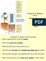 Transport of Water in Plants