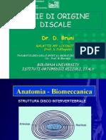 Algie Discali Scienze Motorie Rimini
