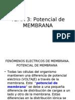 potencial de membrana 1