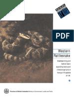 Rattlesnake