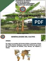 Insectos Plagas en Musaceas (Dulcenys Estanga)