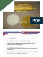 Presentación estructura y composición nutricional de los cereales