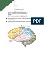 fungsi lobus2 cerebri
