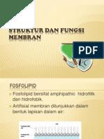 membran1