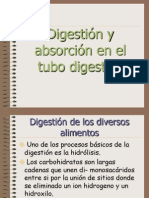Digestion y Absorcion en El Tubo Digestivo 5