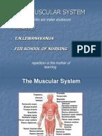 Class 2012 - Muscular System - 2