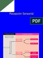 Receptores Sensoriales