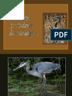 Pájaros Port Adores de Mensajes