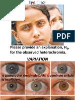 Eye Color Power Point - Genetics Exam 1