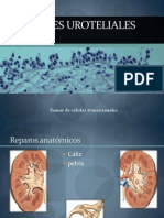 Tumores uroteliales