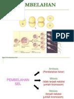 Pembelahan Sel (Mitosis)