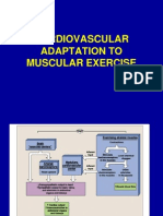 Tbl Cardiovascular Adaptation to Muscular Exercise