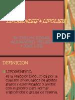 LIPOGENESIS & LIPOLISIS