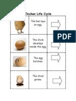 The hen lays an egg
