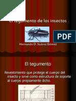 El Tegumento de Los Insectos