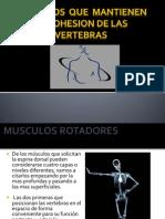 Musculos de Mantienen La Cohesion de Las Vertebras
