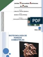 BIOTECNOLOGÍA HONGOS COMESTIBLES