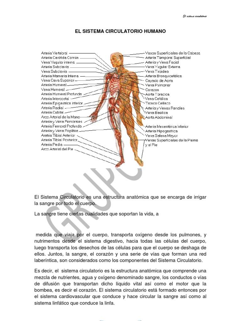 Excepcional Arteria Cefálica Foto - Imágenes de Anatomía Humana ...