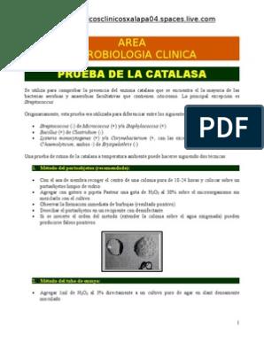 prueba de catalasa para bacterias