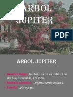 ARBOL JUPITER 2