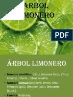 ARBOL LIMONERO