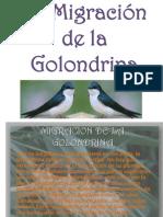 La Migración de la Golondrina