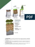 O INTEMPERISMO é um conjunto de processos físicos e químicos que geram a degradação das rochas e a consequente formação dos solos
