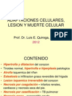 Adaptaciones Celulares Lesion y Muerte Celular