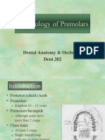 Morphology of Premolars